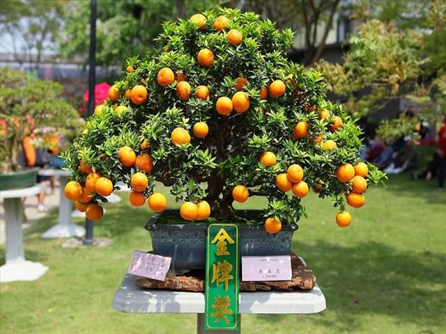 Festival das Orquídeas de Taiwan53