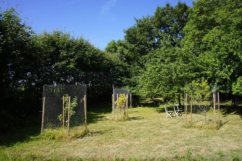 Tjoernbjerg-Have-2014-07-17 (15)