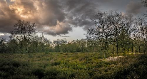 winter sunset sky panorama nature clouds sonnenuntergang belgium heather natur himmel wolken landschaft heide kessel belgien