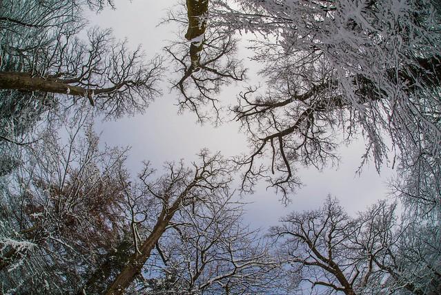 winter colors (01)