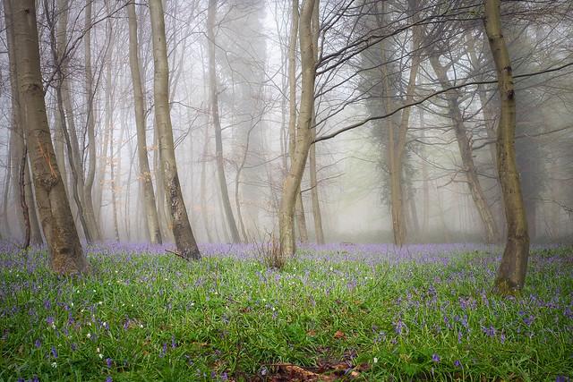 Le réveil des elfes bleues