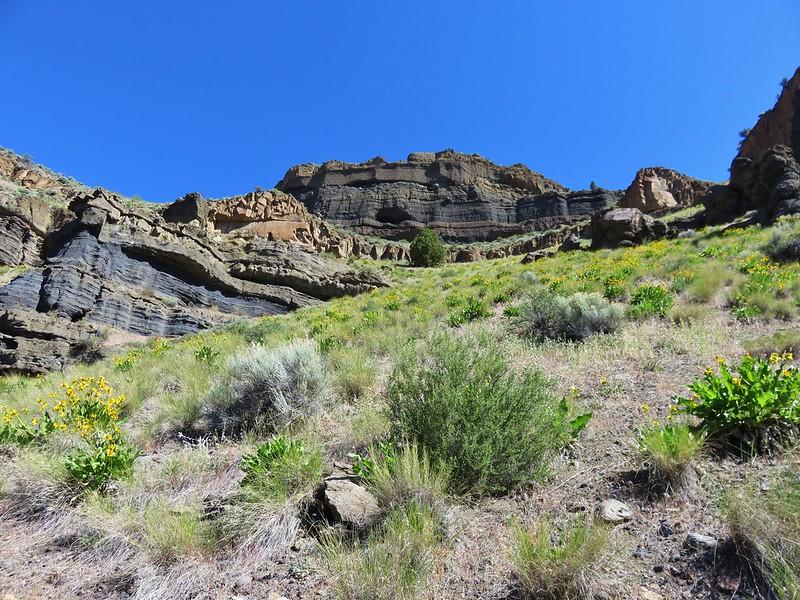 Balsamroot hillside