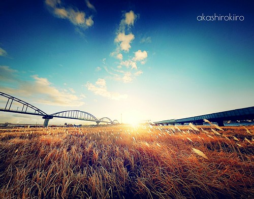 morning bridge japan bluesky ironbridge aomori hachinohe japanesepampasgrass morningsky morningsun すすき 青森 橋 鉄橋 青空 朝日 八戸 xperia