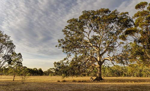 australia melbourne gumtree greenvale canon24105l canoneos6d woodlandshistoricpark