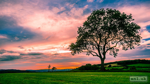 sunset tree grass southwales wales landscape unitedkingdom gb lightroom bassaleg an1 adobelightroom alannewman decymru anewman an1uk an1photography