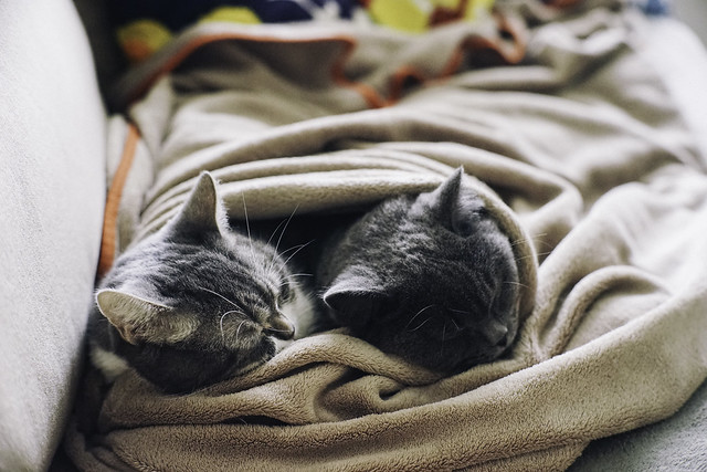 Afternoon Nap
