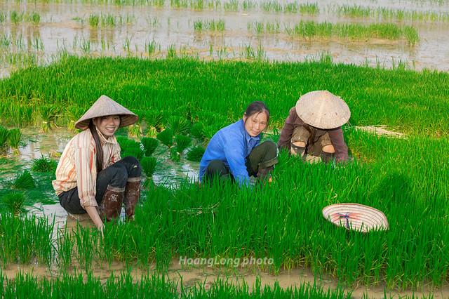 K1719.0410.Đồng Mỏ.Hữu Lũng.Lạng Sơn
