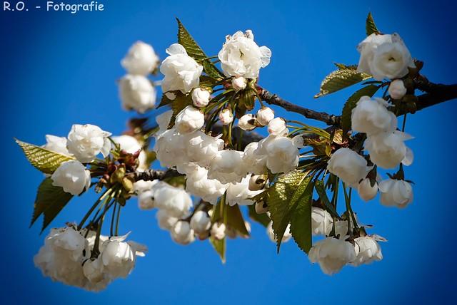 Blüten / Blossoms