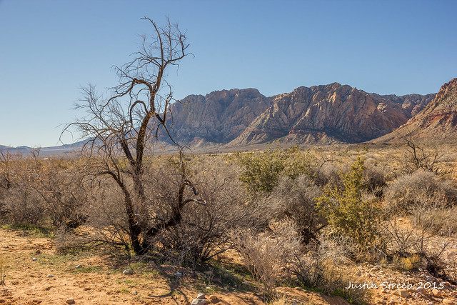 Red Rock Canyon- 4