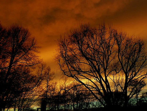 street city blue trees winter light sunset red sky orange sun tree nature yellow night clouds germany de outside photography photo europe bremen stormiscomingup