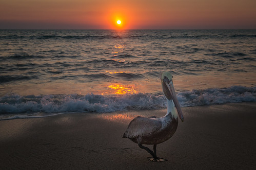 sunset sun nature mexico wildlife pelican nayarit mx cruzdehuanacaxtle canon6d mexico2015 img8613e