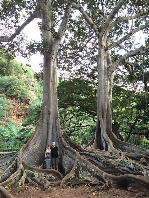 The Jurrasic Park trees