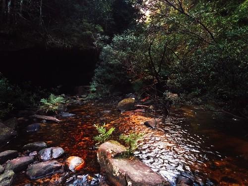 Stream in the Australian bush | by Markus Jaaske