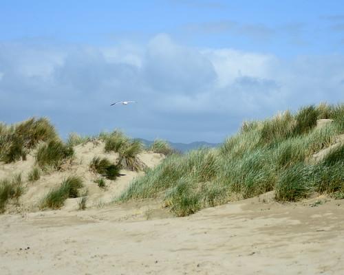 sky bird beach clouds landscape seaside nikon escape seagull dunes relaxing morrobay d7200