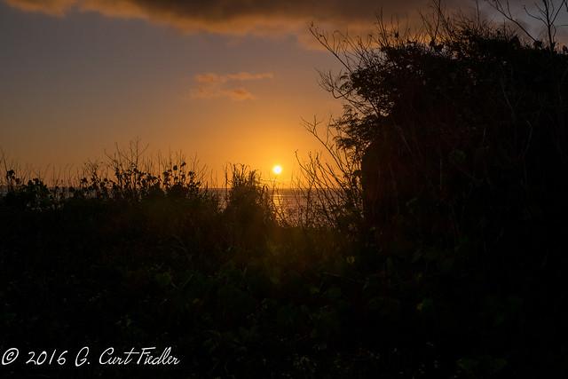 Asan Sunset Through the Brush