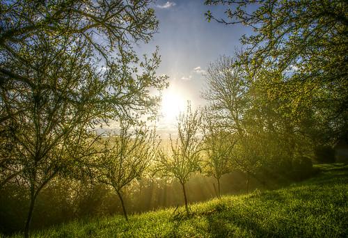 sky sun tree nature sunrise soleil ciel hdr contrejour k5