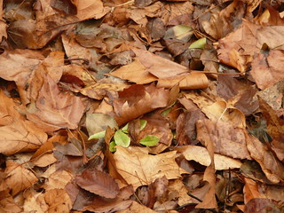 Dead Leaves | by Captain Maybe
