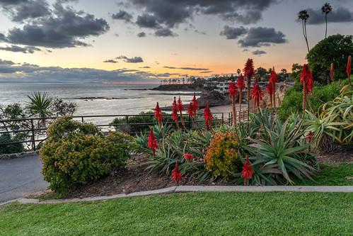 ocean california flowers winter sunset sky cliff seascape flower beach clouds fence geotagged evening nikon unitedstates cliffs palmtrees pacificocean palmtree hdr lagunabeach aloevera hff heislerpark nikond5300