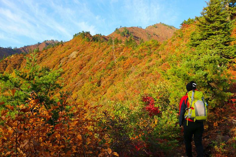 平ヶ岳 紅葉