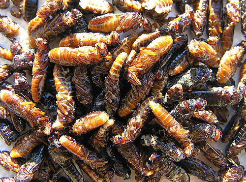 ORIGINAL FILE NAME: 25650515615_c4a1a19a97.jpg  CAPTIONS IN DIFFERENT LANGUAGES: EN: DT_EN_Fried termites - credits to Dick Culbert - Flickr SV: DT_SV_Stekta termiter - fotokredit till Dick Culbert - Flickr  LINK IN CAPTION: https://www.flickr.com/photos/92252798@N07/25650515615/in/photolist-F5DADe-29ikh4a-ffJZqK-7E1AG5-7E1AD7-7DWLze  LINK IN CAPTION / LINK TO SOURCE: https://www.flickr.com/photos/92252798@N07/25650515615/in/photolist-F5DADe-29ikh4a-ffJZqK-7E1AG5-7E1AD7-7DWLze  IMAGE ADDRESS: https://live.staticflickr.com/1506/25650515615_c4a1a19a97.jpg  DOWNLOAD PLATFORM: Flickr  TITLE: Fried termites  KEYWORDS: fried termites, Party Bugs, Bug Bazaar  AUTHOR: Dick Culbert - https://www.flickr.com/photos/92252798@N07/  LINK TO AUTHOR'S PAGE: https://www.flickr.com/photos/92252798@N07/  COMMENTS: Resized from the original by Party Bugs (www.partybugs.com). Original photo was downloaded from https://www.flickr.com/photos/92252798@N07/25650515615/in/photolist-F5DADe-29ikh4a-ffJZqK-7E1AG5-7E1AD7-7DWLze  COPYRIGHT: Dick Culbert - CC BY 2.0  THIS INFORMATION WAS RECORDED ON 2.4.2021.
