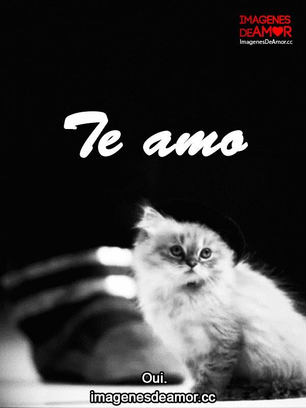 5 Gif De Gatos Graciosos Con Frases Cortas De Amor Flickr