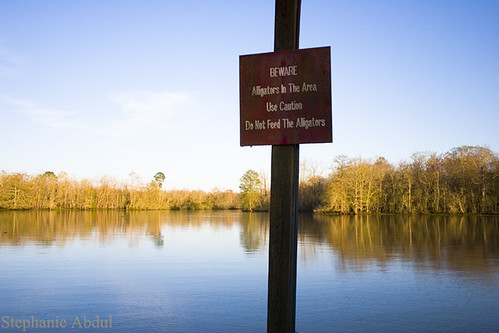 park sunset lake water sign forest warning point boat dock louisiana lafayette state beware gator wildlife south alligator southern bayou fosse cajun