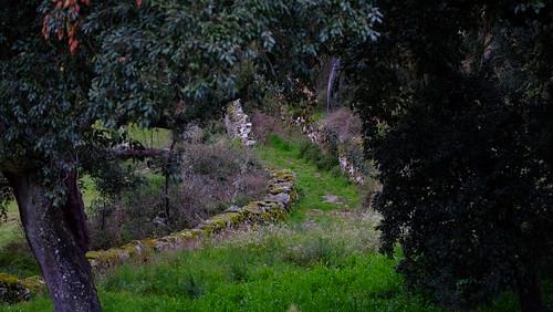 Untitled path