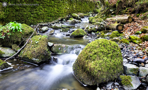 sep silent eagle photography silenteaglephotography canon canoneos5dmarkiii landscape longexposure lee filters water rocks green northeast durham outdoor waterfall plants nature silenteagle09 high force north east copyright© 8seconds ep9258