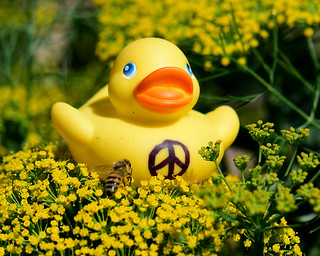 Peace Duck in the Dill with a Bee