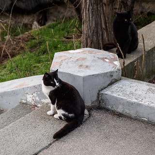 Cats of Sevastopol | by Fizzik.LJ