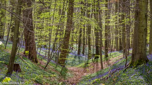 belgium be vlaanderen zonienwoud hoeilaart