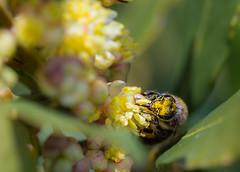 Bee  160316-2500