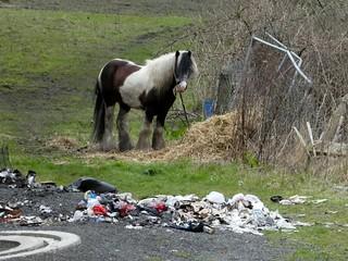 Fallowfield Loop - a horse seen near the Sandford Lane bridge