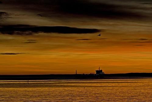 bird norway sunrise geotagged norge flying december seagull norwegen oil noruega tanker norvegia norvege vestfold norja åsgårdstrand norveska asgardstrand norvegienne impressedbeauty aplusphoto