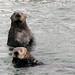 Flickr photo '3b. Waterproof Fur Coats' by: kqedquest.