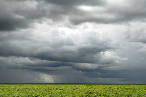 bad weather on the Serengeti plains | by La Lince