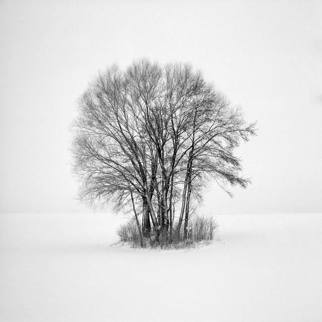 isle of trees