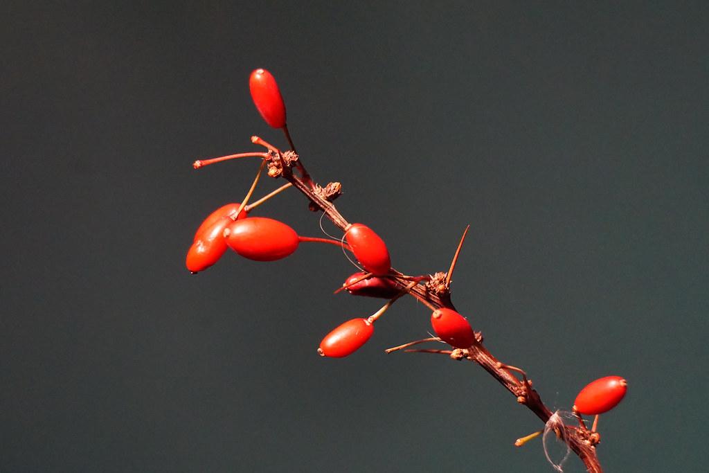 Last berries