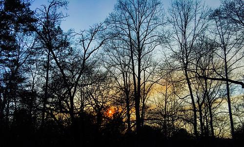 trees sunset landscape golden magic hour project365 500px project366 ifttt folkloistic