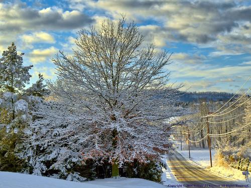 snowflake winter sky white snow tree nature weather clouds sunrise nikon pennsylvania branches flake east pa february dslr hdr chapman elysburg ronaldjchapman ronchap3 ronchap2