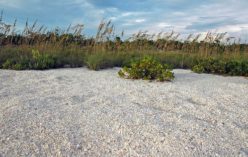 Seashells & sea oats (Bowman's Beach, Sanibel Island, Florida, USA) | by James St. John