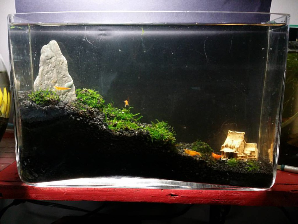 Self sustaining shrimp setup no filter needed #nanotank #n