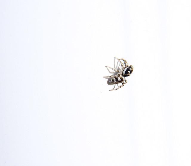 Zebra Jumper Whiteout
