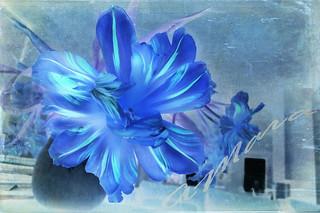 Die blaue Blume - Wunder der Welt und Symbol ewiger Liebe | by Mara ~earth light~