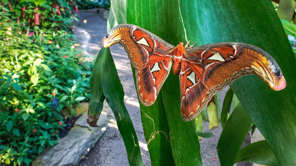 Cockrell Butterfly Center - Houston, TX