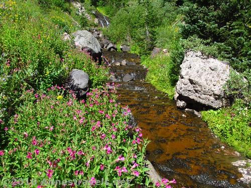 Dundee Creek, Wyoming