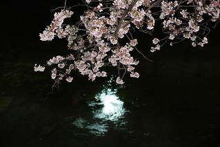 Sakura@bunkyouku_04