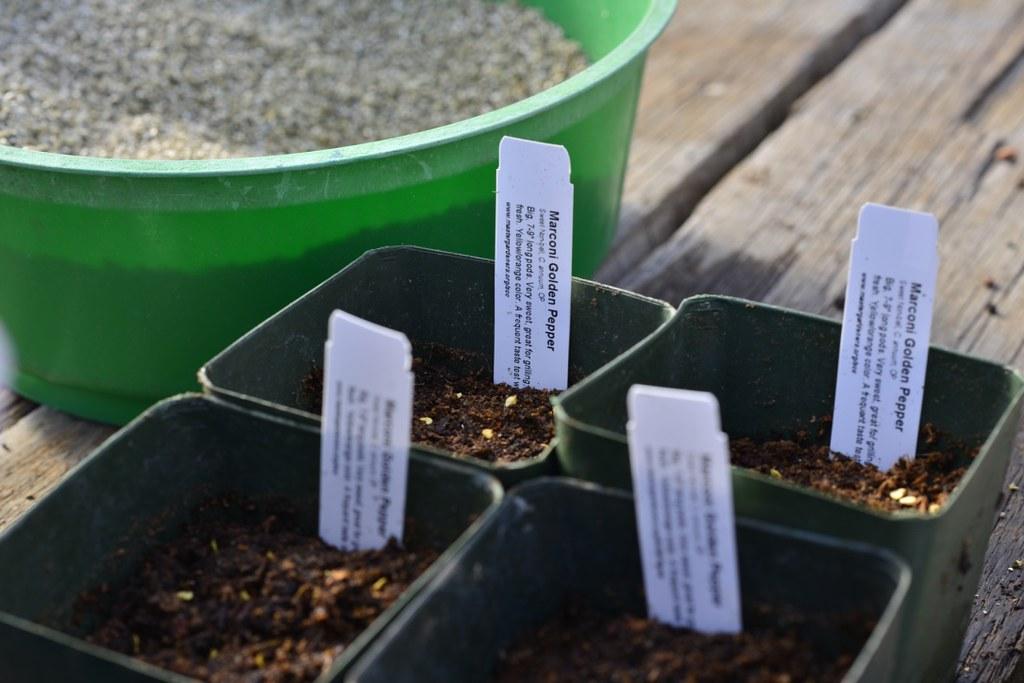 Thumb dsc8560 1024 pepper seeding jan 15th 2016 - Master gardeners santa clara county ...
