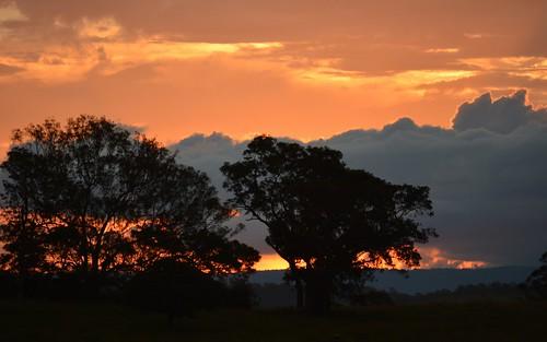 trees sunset silhouette landscape australia nsw northernrivers richmondvalley