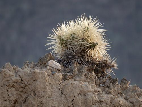 Jardin Botanico Helia Bravo Hollis - cactus - 3